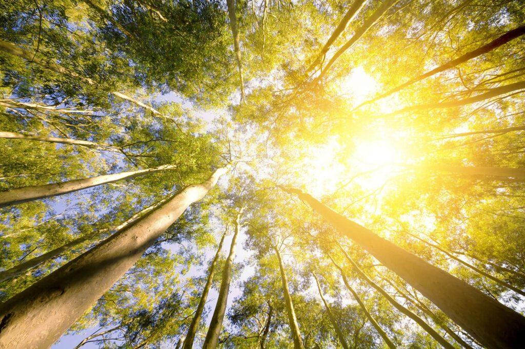 citrefine-citriodiol-Beneficial carbon footprint